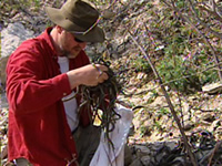 Les couleuvres rayées de Narcisse (Thamnophis) 20-serpents-mason