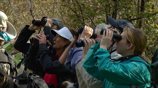 Pointe-Pelée : la mecque des ornithologues