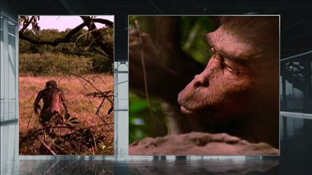 Aide-mémoire: Squelette de   Lucy, 40 ans
