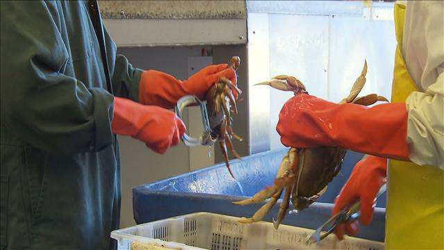 Faire voyager les fruits de mer vivants