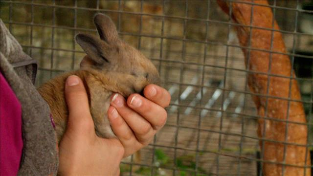 Des beaux lapins