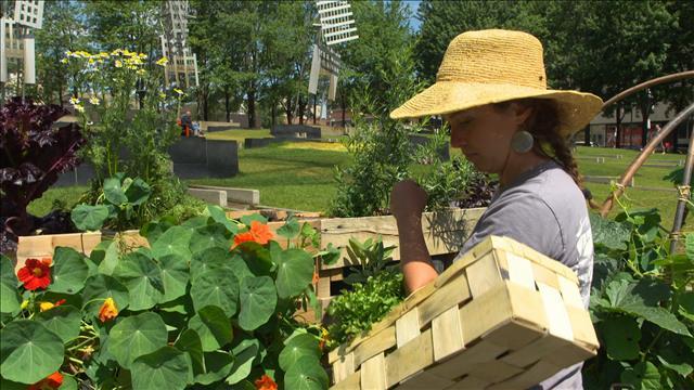 Un jardin potager pour itinérants
