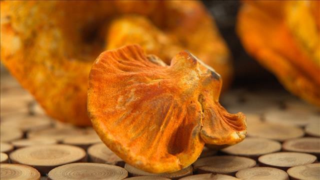Produit vedette: le champignon homard