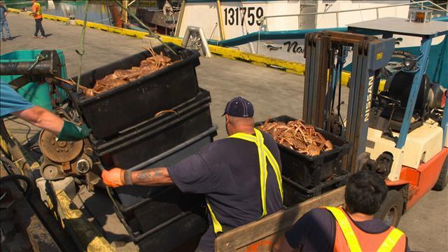 La prospérité de la pêche : de la morue au crabe