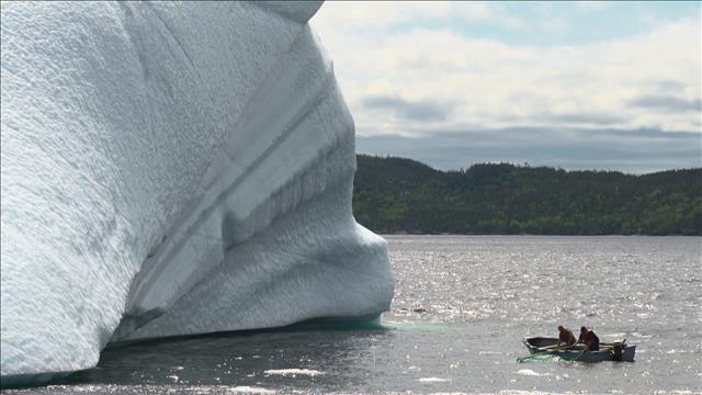 La chasse aux icebergs