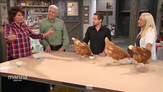 Comment entraîner une poule