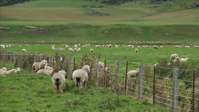 La terre du mouton