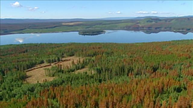 Impacts des changements climatiques sur la forêt boréale