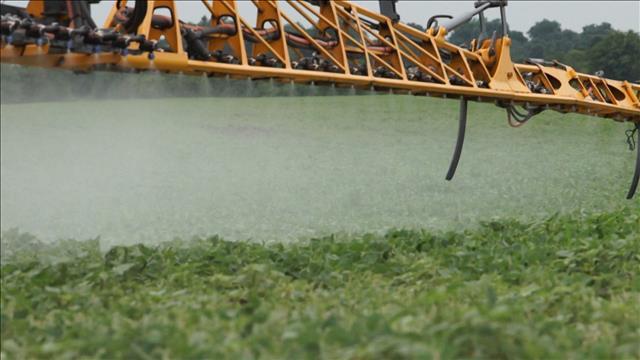 Les limites d'un herbicide
