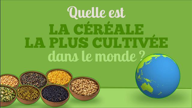 Quelle est la céréale la plus cultivée dans le monde?