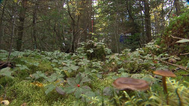 Du troc dans les bois