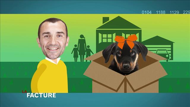 Le fin mot de l'histoire sur l'assurance et les chiens