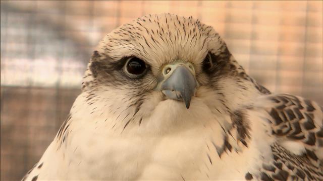 Ça fait peur aux oiseaux