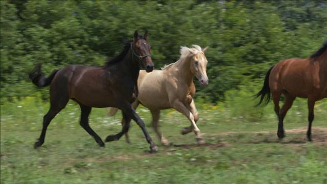 La vie des chevaux après la course