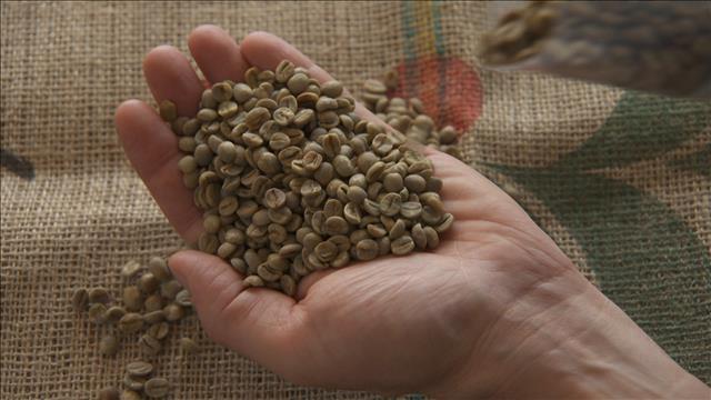 À la découverte du café brésilien