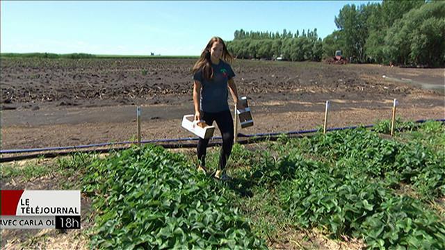 Ma super «job» d'été dans un champ de fraises
