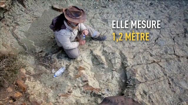 Une empreinte de dinosaure découverte en Bolivie