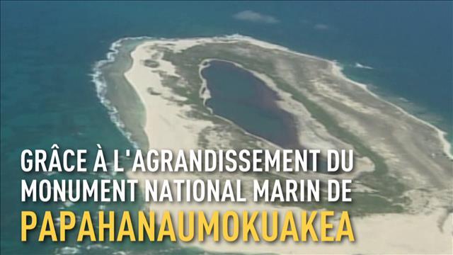 Barack Obama crée la plus grande réserve naturelle marine au monde
