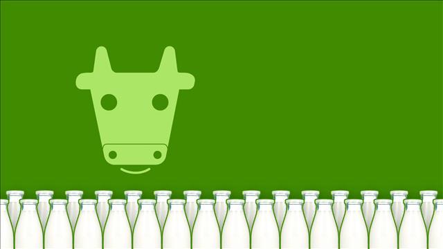 Quel est l'espérance de vie d'une vache laitière?