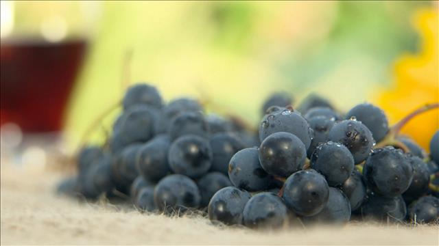 Produit vedette raisin de table du Québec