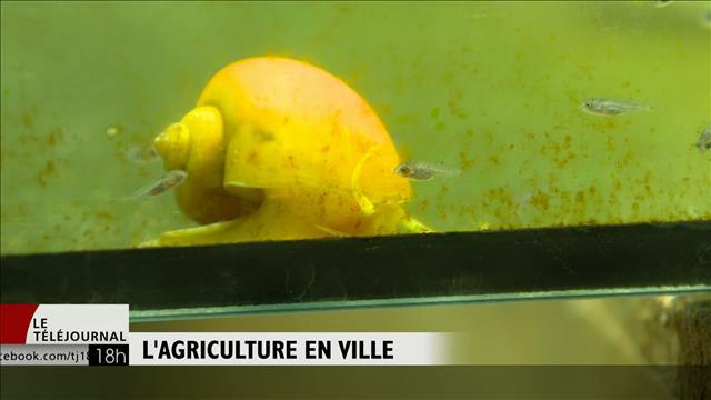 Un montréalais repousse les limites de l'autosuffisance dans Rosemont-La Petite Patrie