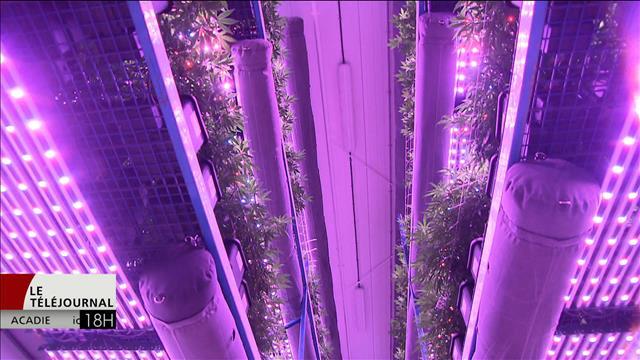 Une formation pour produire de la marijuana au Nouveau-Brunswick