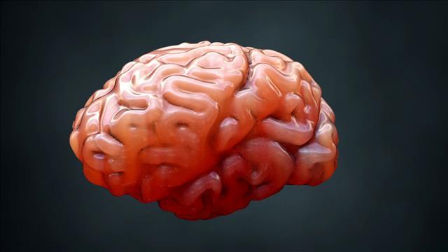 Flash-science: les plis dans le cerveau