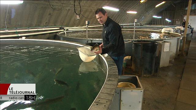 Un producteur d'omble chevalier voit grand pour sa petite entreprise dans la Péninsule acadienne au Nouveau-Brunswick