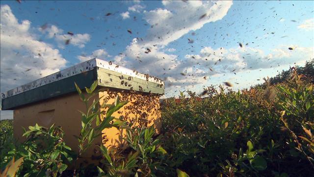 Les abeilles de demain