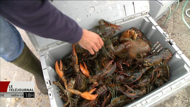 Un vent d'optimisme souffle sur l'industrie du homard (16-03-2017)
