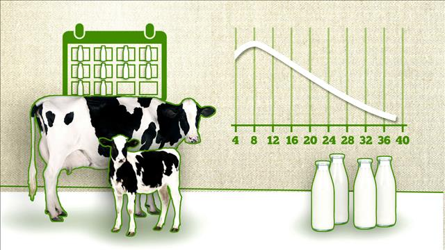 Capsule chiffrée : la production laitière
