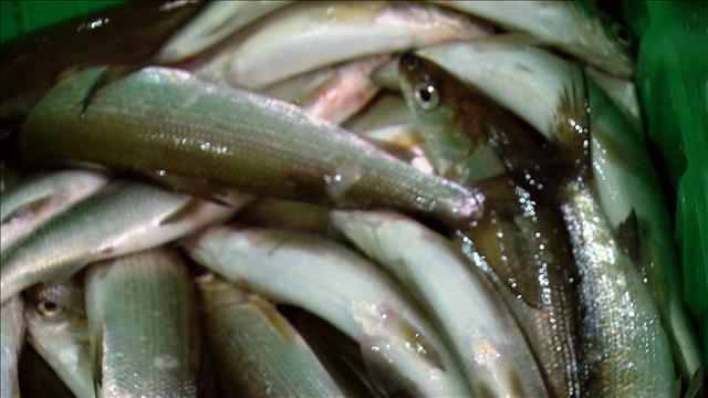 Nouvelle espèce de poisson