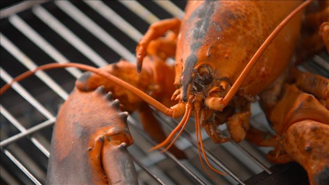 Notre produit vedette cette semaine: le homard