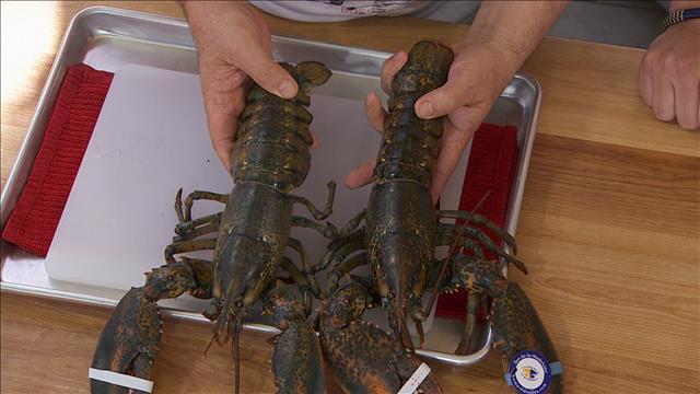 Les secrets du homard