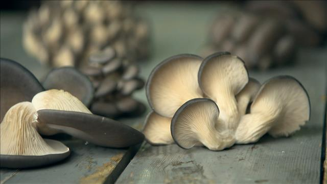 Des champignons qui poussent dans du café