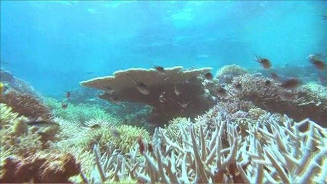 L'acidification de la Méditerranée