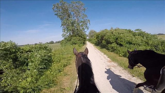 Une section du sentier ouverte aux cavaliers dans le comté d'Essex