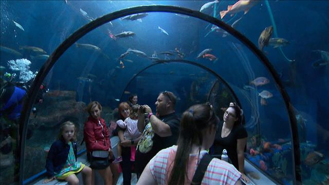 D'où provient l'eau de l'Aquarium du Québec?
