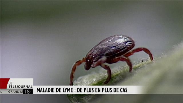 Maladie de Lyme : de plus en plus de cas au Québec