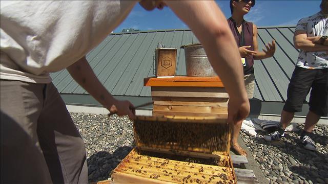 Vancouver fait la promotion de l'apiculture urbaine