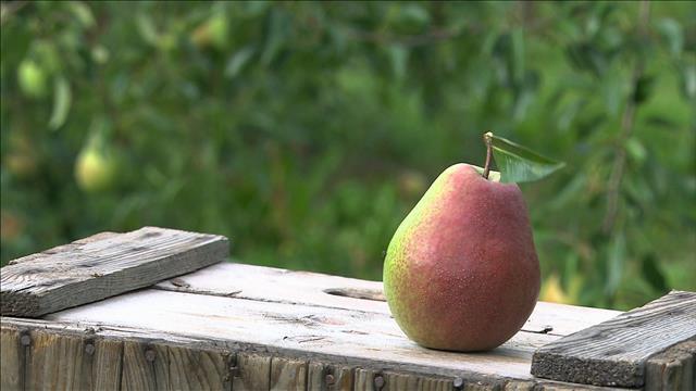 Les poires poussent aussi au Québec!