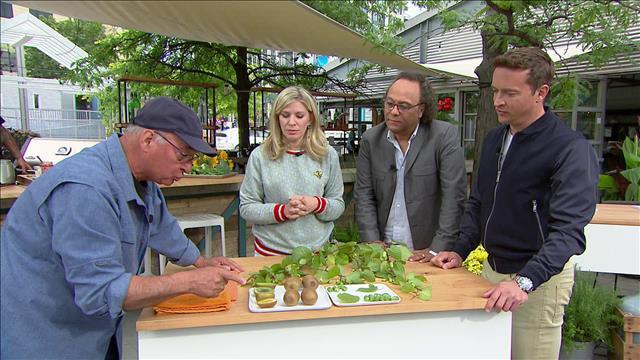 Faire pousser des kiwis au Québec