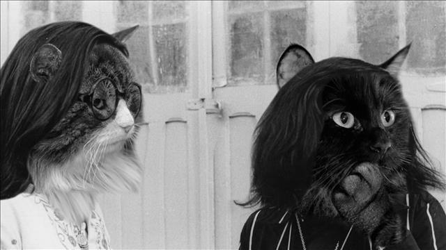C'est quoi chat?