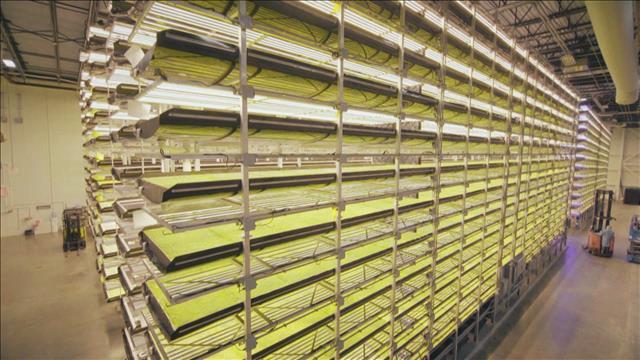 Agriculture urbaine : Des fermes verticales