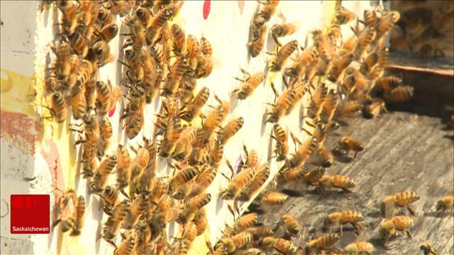 Les abeilles et le miel, un monde fascinant pour Alyce Hamon