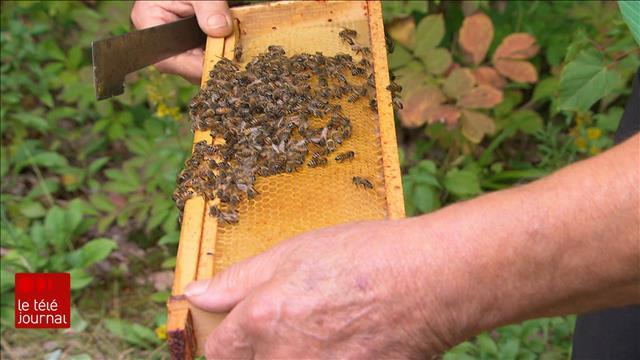 Les pesticides «tueurs d'abeilles» menacent la biodiversité