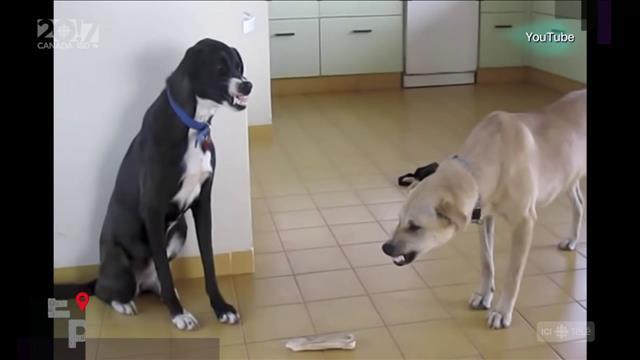Les troubles psychologiques chez les chiens