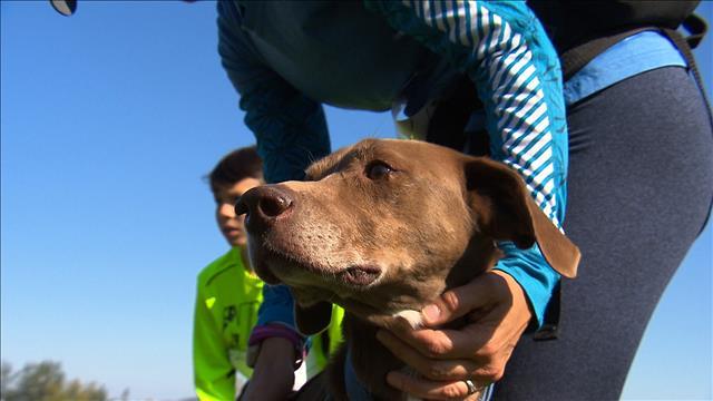 Incursion dans l'univers des sports canins attelés