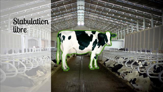 Pourcentage d'élevages en stabulation libre