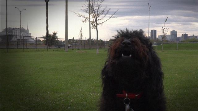 Contraventions canines…. trop de mordant ?